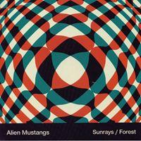 Sunrays / Forest